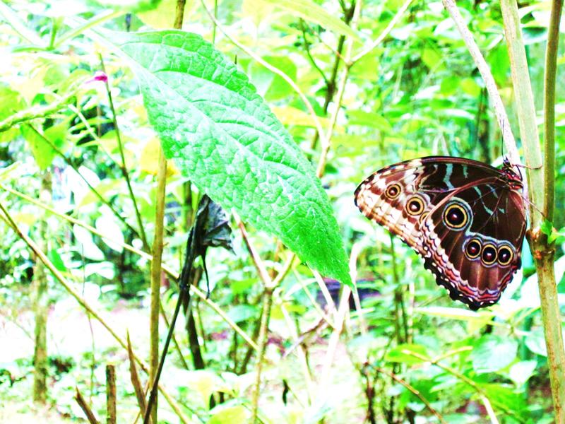 jungle butterflies
