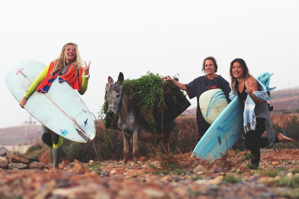 04_donkeys and surf