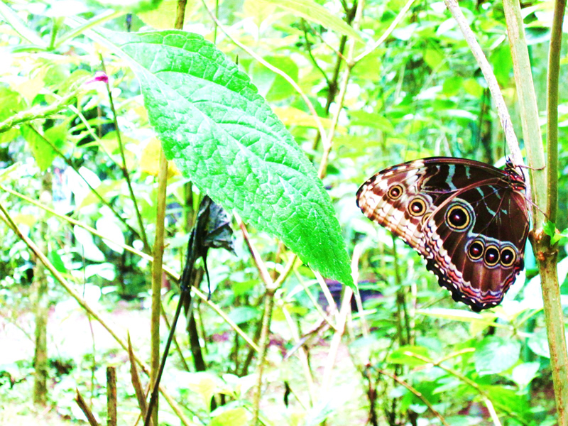 jungle butterflies
